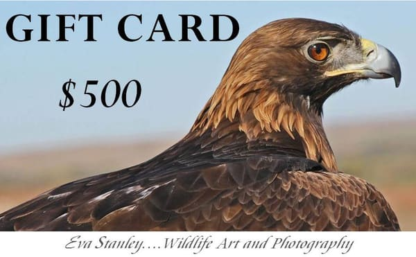$500 Gift Card | Drawn To Nature