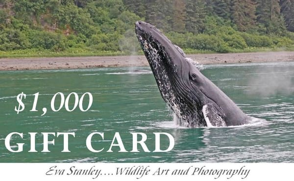 $1,000 Gift Card | Drawn To Nature