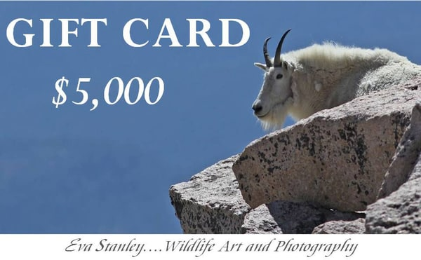 $5,000 Gift Card | Drawn To Nature