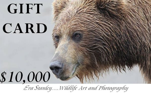 $10,000 Gift Card | Drawn To Nature