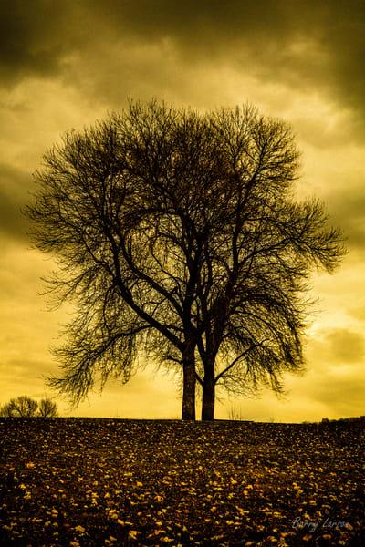 Golden Tree 0711 23 1 Photography Art | Larson Fine Art Photography