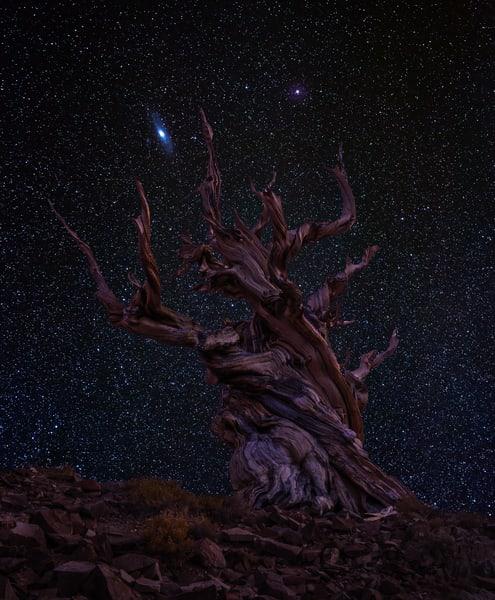The Ancients Photography Art | Josh Kimball Photography