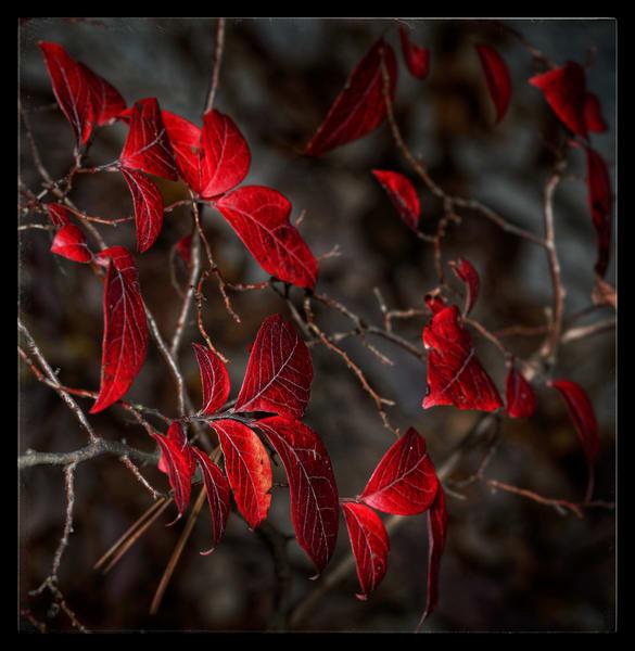 Red Period Art | Danny Johananoff