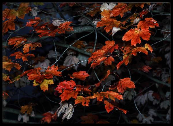 Bright Autumn Art | Danny Johananoff