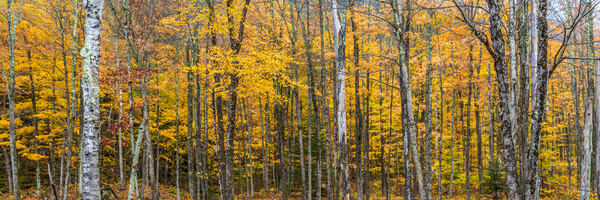 Fall Photography Art | Scott Krycia Photography