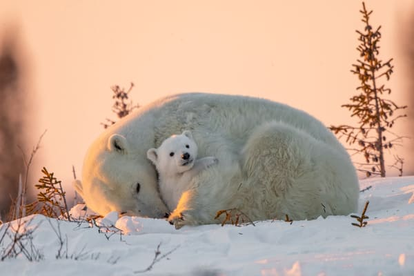 Bear Hug Photography Art | danieldauria
