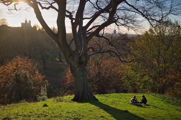 November Sun In Greenwich Park Art | Martin Geddes Photography