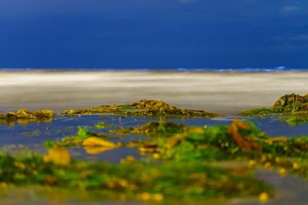 La Jolla Beach Seaweed Bio Luminescence Fine Art Print Art | McClean Photography
