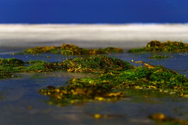 Seaweed Blurr At La Jolla Beach Fine Art Print Art | McClean Photography