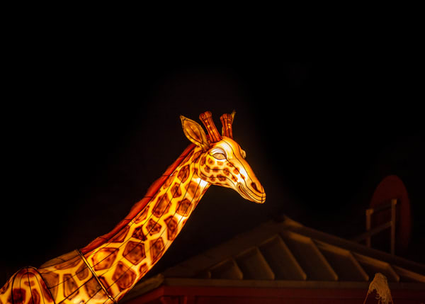 Lantern sculpture of a giraffe