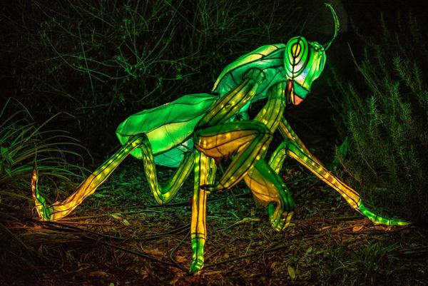 Praying mantis lantern sculpture photograph