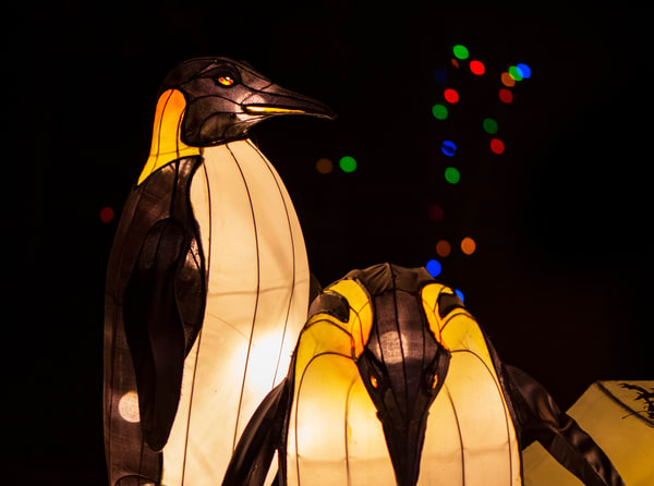 Penguin lantern sculptures photograph