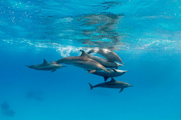 Stack of Dolphins is a fine art photograph available for sale.