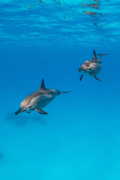 Two Dolphins is a fine art photograph available for sale.