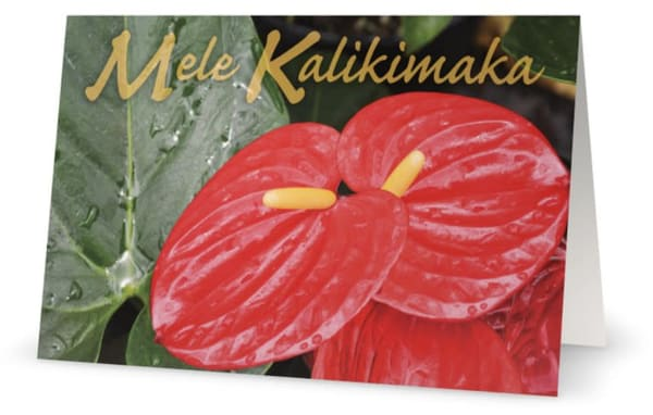 Mele Kalikimaka Antherium | Bird In Paradise