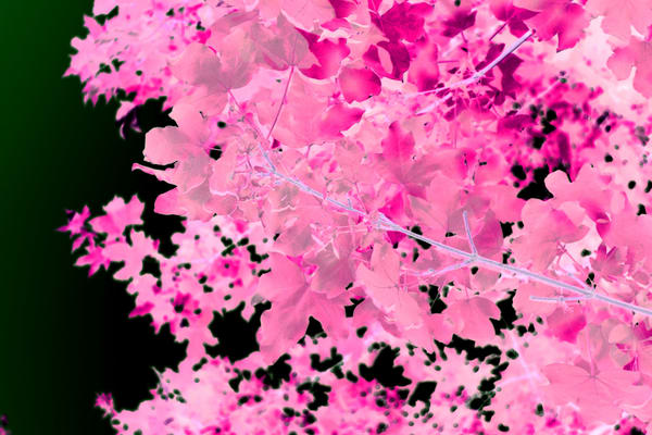 Pink Leaves Art | onlythemoon