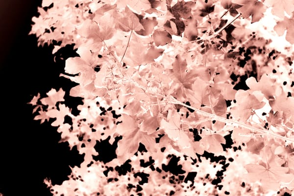 Autumnal Leaves Art | onlythemoon