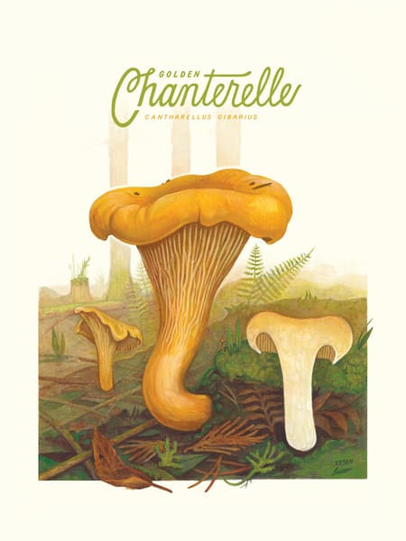 Golden Chanterelle Art | Cool Art House - online art gallery with hip emerging artists. Collect cool art you can view on your own wall before you invest!