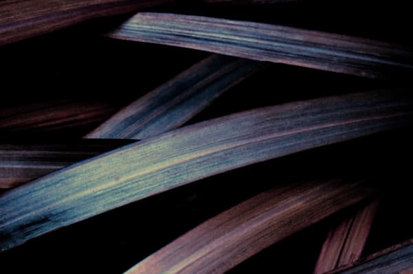 Grass (Early Autumn) No. 2 Art | Anna Jaap Studio