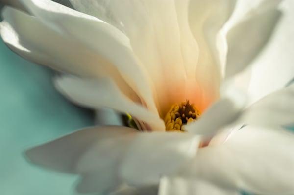 Blue Spring Art | Anna Jaap Studio