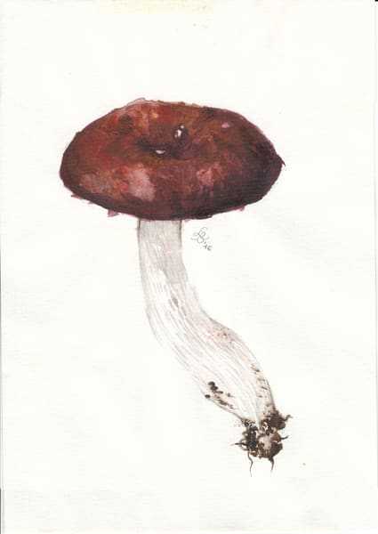 Russula Study 2016  Art | Cool Art House - online art gallery with hip emerging artists. Collect cool art you can view on your own wall before you invest!