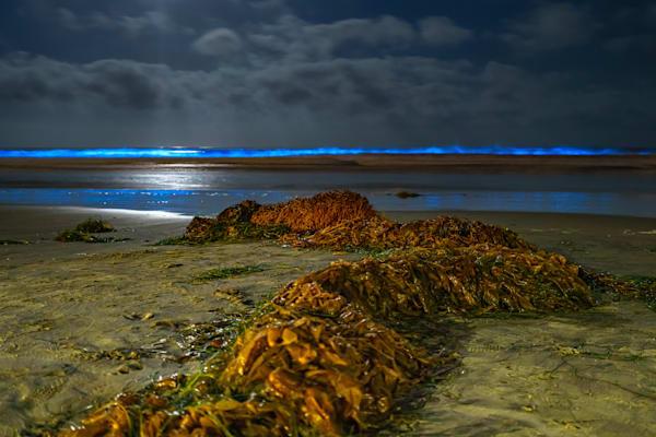 (Original) Bioluminescence at La Jolla Beach Original Metal Wall Art By McClean Photography