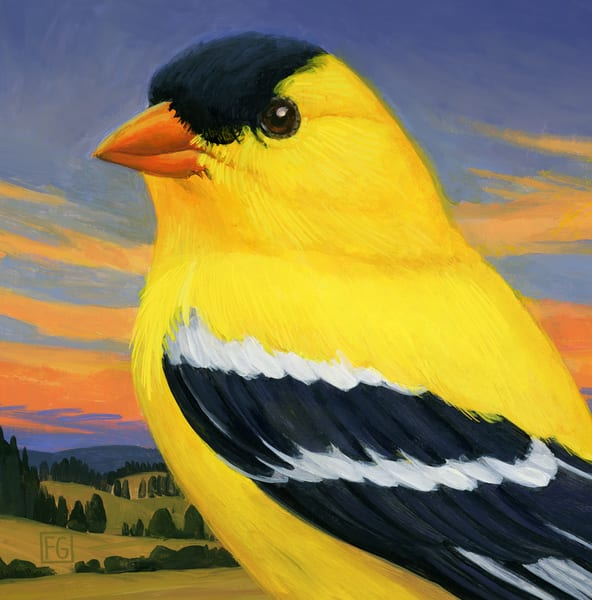 American Goldfinch | Studio Girard