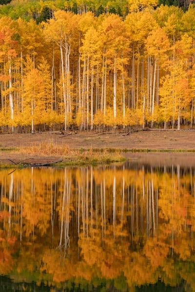 Aspen Reflection Photography Art   Alex Nueschaefer Photography