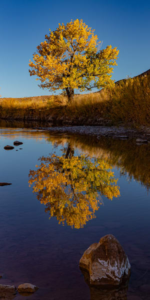 The Good Tree Photography Art   Alex Nueschaefer Photography
