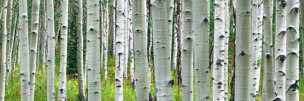 Nature's Barcode  Photography Art   Alex Nueschaefer Photography