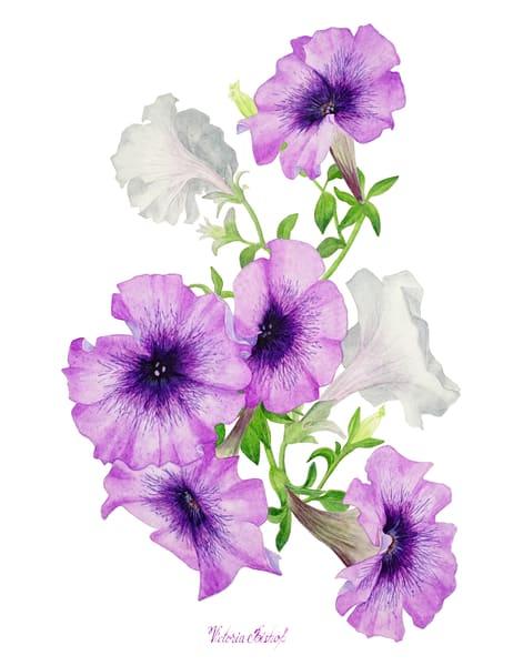 Petunia Print Art | victoriabishop.art