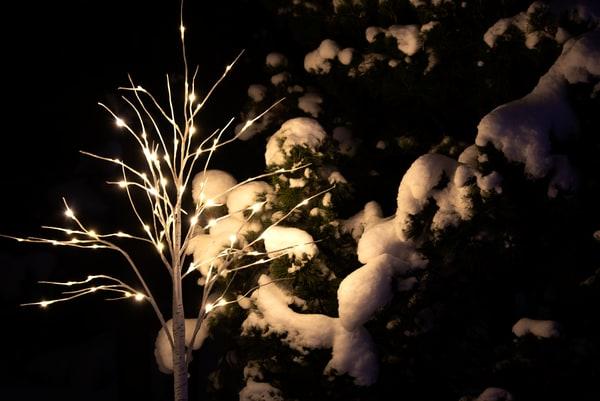 Winter Glow Tree Night