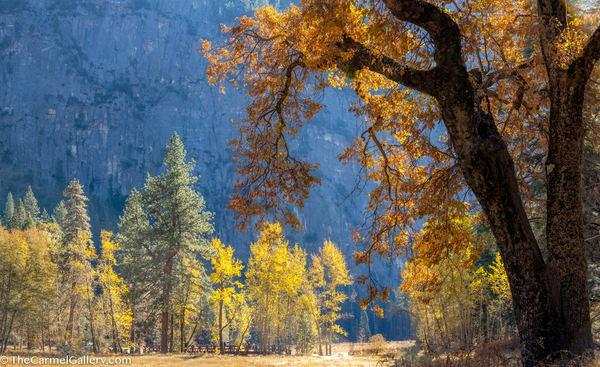 Yosemite Autumn Art | The Carmel Gallery