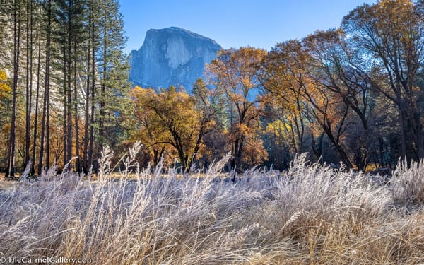 Autumn View, Half Dome Art | The Carmel Gallery