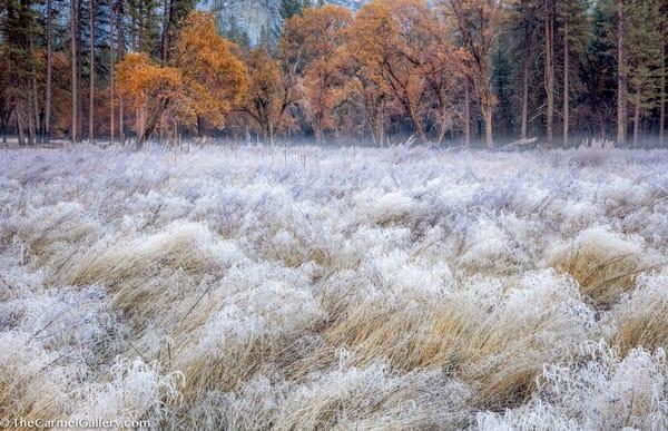 Meadow Frost, Yosemite Art | The Carmel Gallery