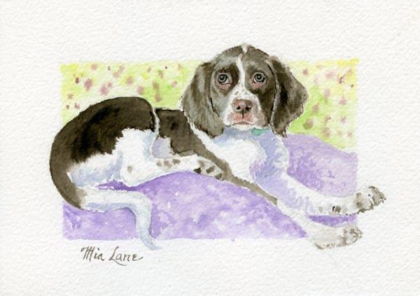 Spaniel Pup Laying  Original Water Colour Art | Mia Lane
