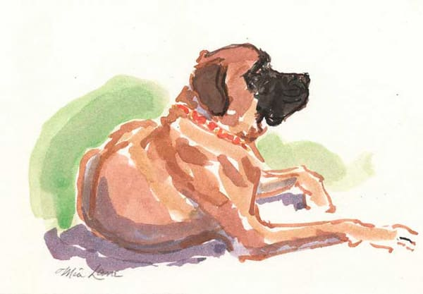 Old English Mastiff Laying  Original Water Color Art | Mia Lane