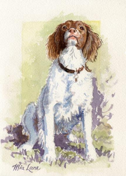 Spaniel Sitting  Original Water Colour Art | Mia Lane
