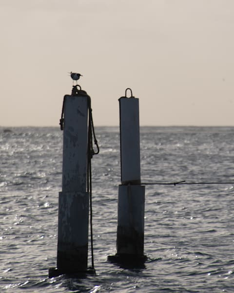 At Sea..Gull 2 Art | Thriving Creatively Productions