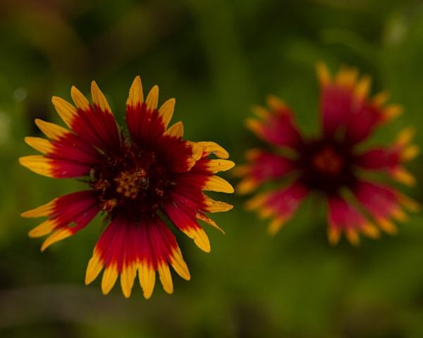 Blackeye Flower Art | Thriving Creatively Productions