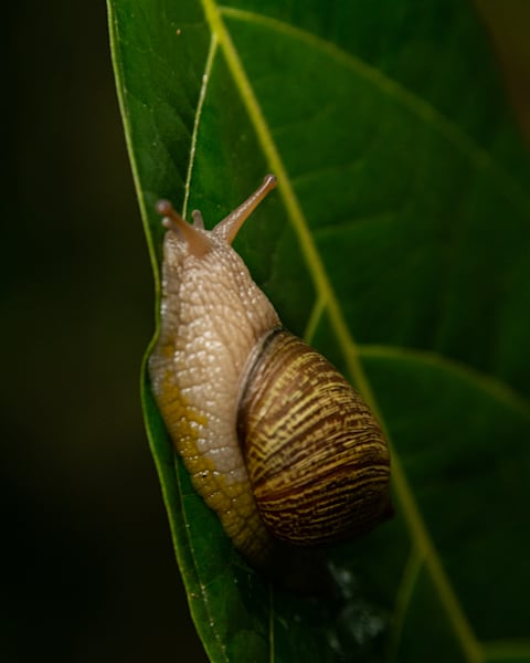 Snails Pace Art   Thriving Creatively Productions