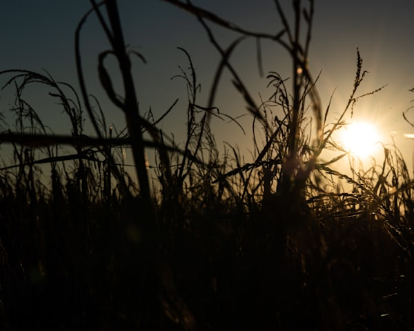 Fields Of Sunsets Art | Thriving Creatively Productions
