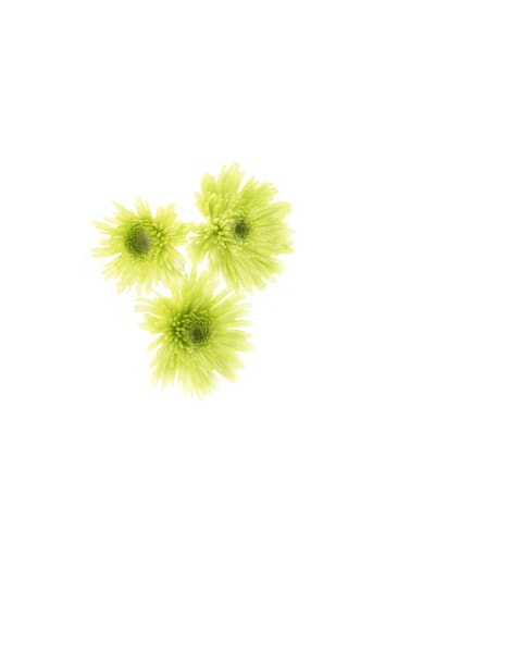 Green Blooms Art | Thriving Creatively Productions