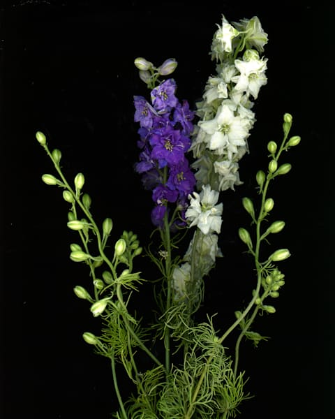 Purple And White Flowers Art | Thriving Creatively Productions