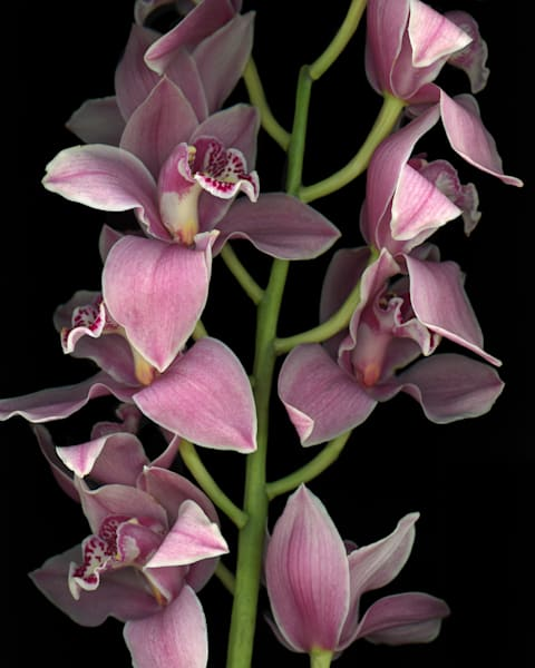 Purple Orchid Blooms Art | Thriving Creatively Productions