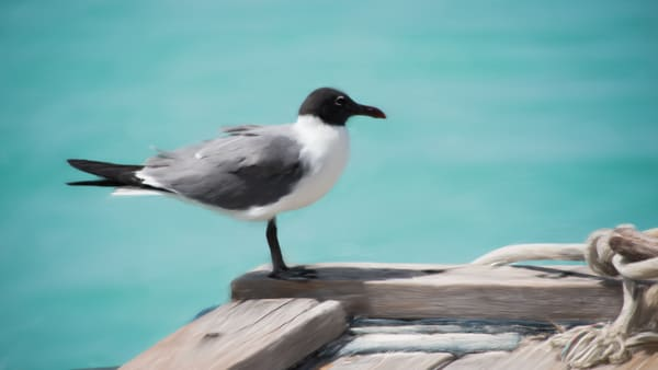 Seagull Aruba Art | Thriving Creatively Productions