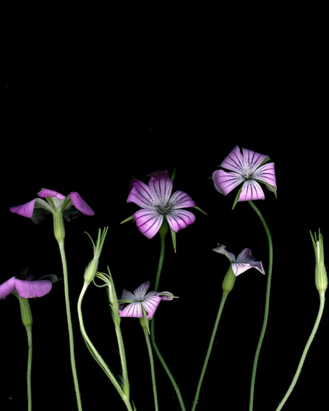 Small Purple Flowers Art | Thriving Creatively Productions