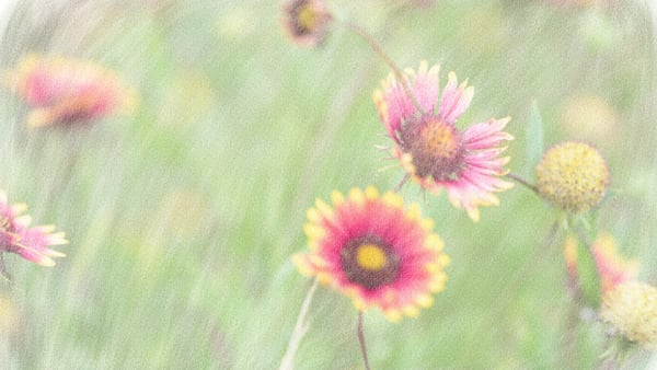 Wild Flowers In Chalk Art   Thriving Creatively Productions