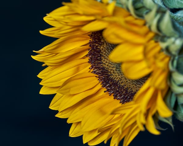 Sunflower Art   Thriving Creatively Productions