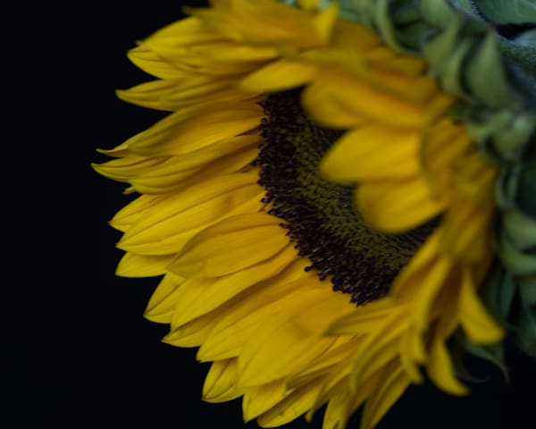 Sunflower 6 Art | Thriving Creatively Productions